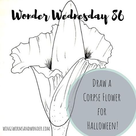 Celebrate The Spooky Creepy And Stinky In Your Nature Journal This Halloween Draw A Corpse Flower With Wings Worms And Won Corpse Flower Nature Journal Wonder