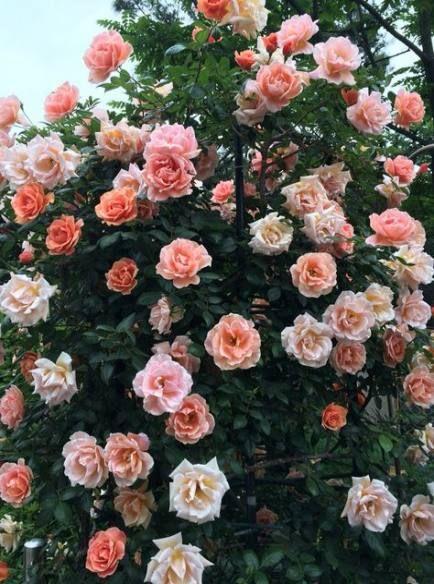 Super Garden Aesthetic Food Ideas Flower Aesthetic Pretty Flowers Flowers Nature