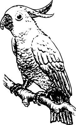 List Of Pinterest Burung Merpati Putih Kartun Images Burung
