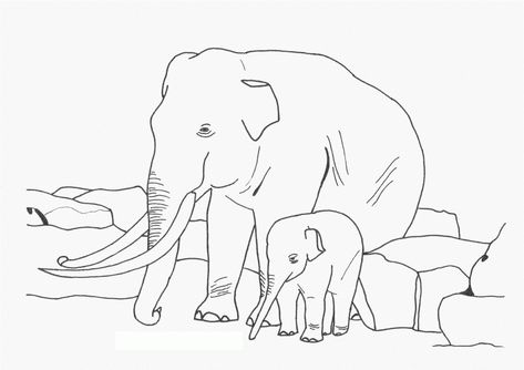 free printable elephant coloring pages for kids  elephant coloring page animal coloring pages