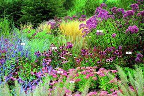 Projektowanie Ogrodow Projekty Ogrodow Aranzacje Ogrodow Porady Architekta Krajobrazu I Architektow Zieleni Pomysly Na Ogrod Tarasy Plants Garden Outdoor