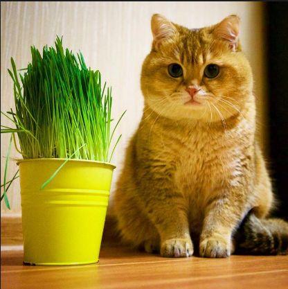 Contoh Description Text Tentang Cat Kucing Dalam Bahasa Inggris Dan Artinya Http Www Ilmubahasainggris Com Contoh Description T Kucing Hewan Gambar Hewan
