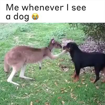 me whenever I see a dog 😭 -