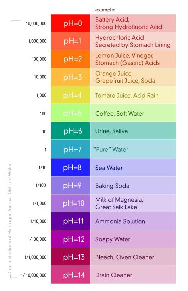 Ph Scale Diagram  Google Search  My Classroom