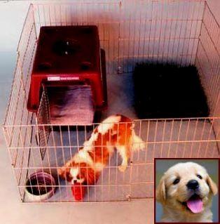 Dog Training Lexington Ky Cesar Millan Dog Training Videos Dog