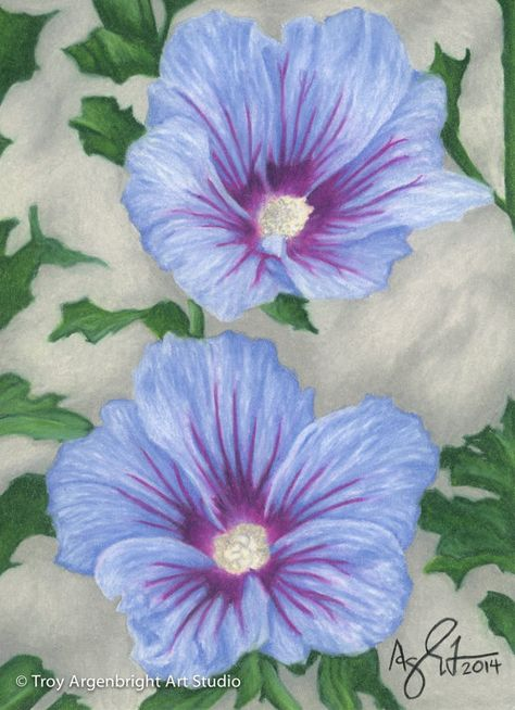 Blue Purple Hibiscus Flower Colored Pencil Drawing Fine Art Giclee Print Color Pencil Art Colorful Flowers Hibiscus
