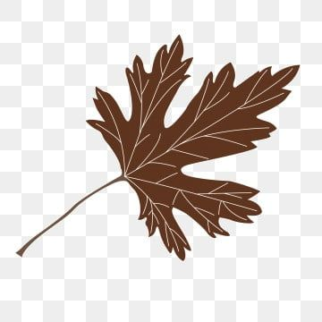 Cartoon Brown Maple Leaves Free Illustration Cartoon Leaves Brown Brown Leaves Png Transparent Clipart Image And Psd File For Free Download Leaf Illustration Cartoon Leaf Free Illustrations