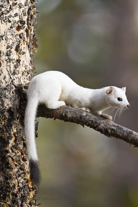 15 Amazing Animals That Start With The Letter E Animals On Planet Earth Enjoy A Unique Position On It In 2020 Rare Albino Animals Interesting Animals Albino Animals