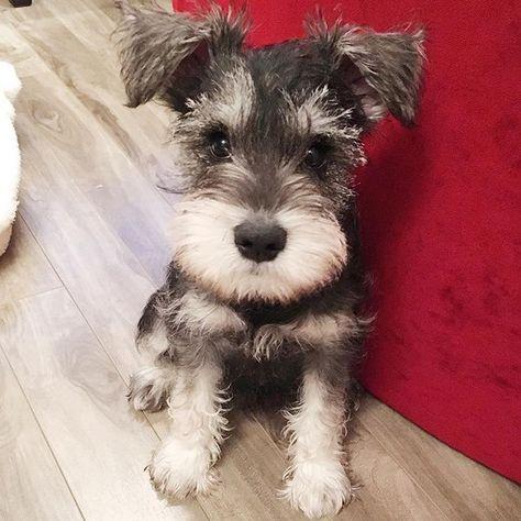 dogsofinstagram Photogenic since 2016....
