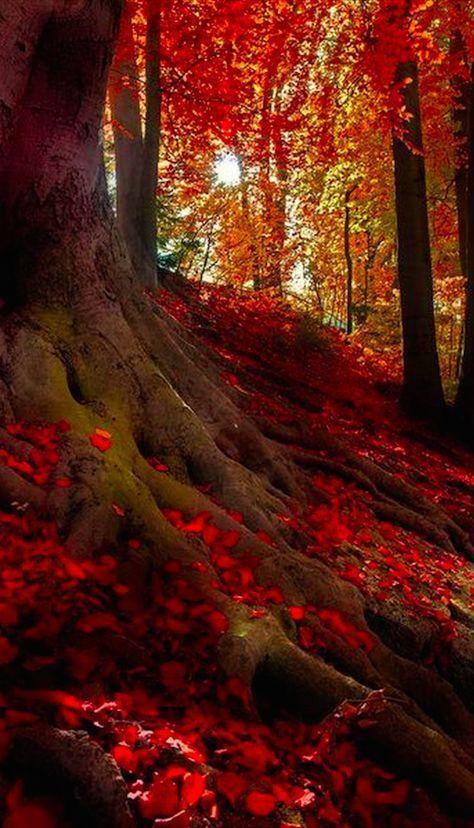Autumn Light By Hannes Cmarits Autumn Lights Scenery Nature