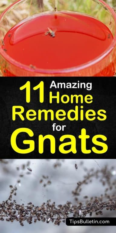 How To Get Rid Of Gnats Inside Home Remedies