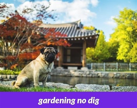 Gardening No Dig 571 20180915180746 53 Gardening Pots Near Me Hotels Garden Tools Uk Only Training Your Dog Easiest Dogs To Train Dog Training Obedience