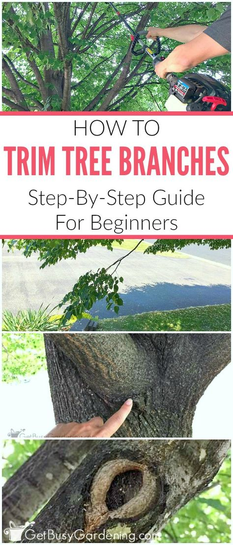 How To Trim Tree Branches A Step By Guide For