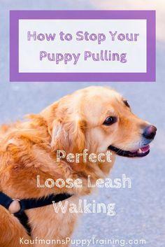 Faint Dog Training Products Dog Dogstuffproducts Dog Stuff Products Training Your Dog Dog Training Dog Training Tips