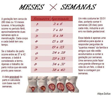 The Mammys Tabela Correta Das Semanas Da Gestacao Gestacao 7