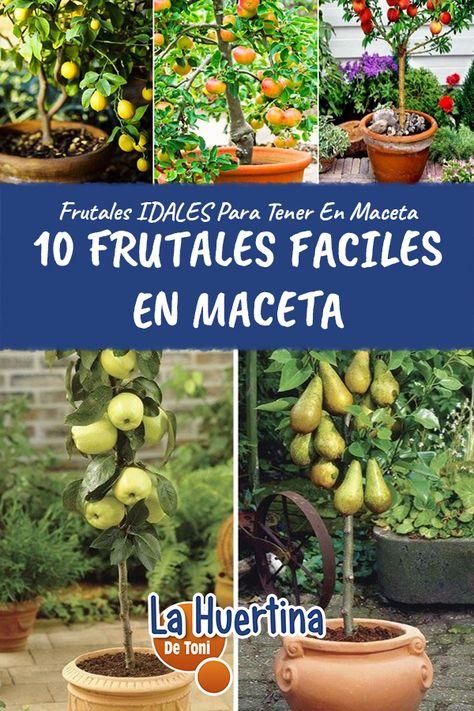 480 Ideas De Cultivo De árboles Frutales Cultivo De árboles Frutales Cultivo De Plantas Jardineria Y Plantas