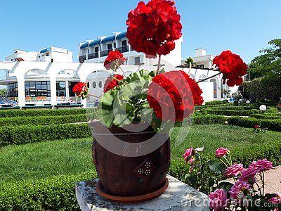 Mon Jardin Hotel Mahmudia Tulcea Danube Delta