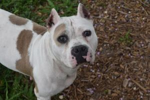 Adopt Lily On Animal Control Help Homeless Pets Dog Adoption