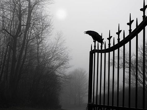 View top-quality stock photos of Graveyard Guardian. Find premium, high-resolution stock photography at Getty Images. Elena Gilbert, Damon Salvatore, Dracula, Gothic Aesthetic, Aesthetic Art, Most Haunted Places, Ciel Phantomhive, Mystic Falls, Paranormal Romance