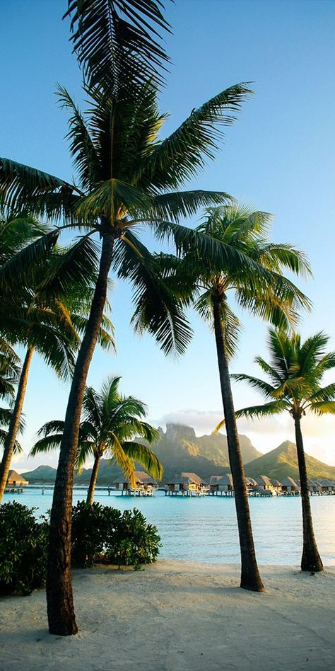 Pic of the Day…Tropical Vibes 🌤️🌴 ------------- #beach #bora #bora #tropics #paradise #travel #beaches