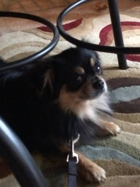 Escaped Dog Bedford Texas Tx United States F40540 Dogs Pets Find Pets