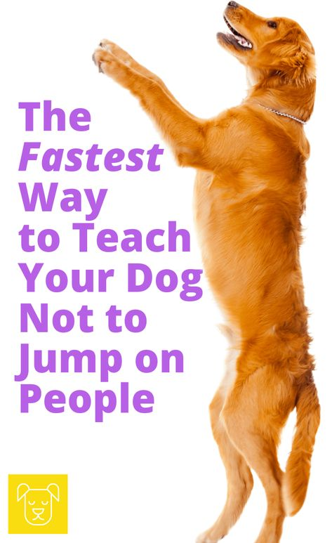 The Easiest Way to Teach Your Dog not to Jump on People