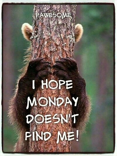I Hope Monday Doesn T Find Me Monday Quotes Morning Quotes Funny Monday Humor