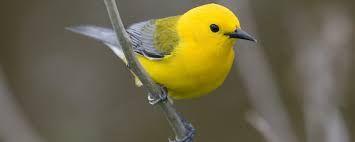 Pin By Sovon On Bird Bird Common Birds Birds