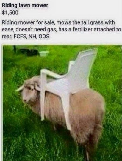 Pin By Sarah F4f On Animal Memes Funny Cute Animals Lawn Mower Riding Lawn Mowers Mowers For Sale