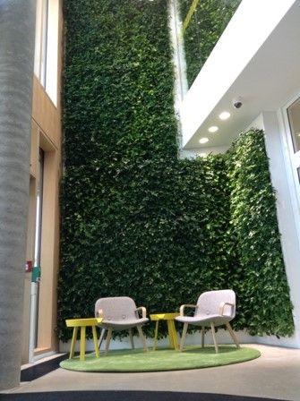 Living green wall of Schefflera & ivies