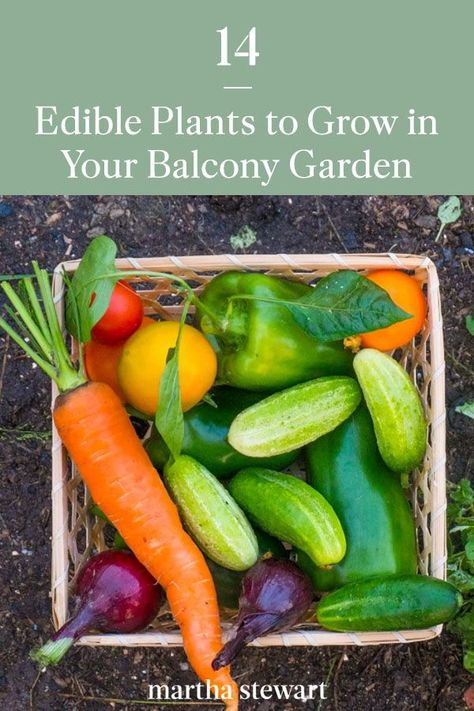 Beginners may be wary about starting a balcony vegetable garden, but we're here to tell you it's a great idea: As there are a number of plants that actually thrive in containers, and that means that even the most amateur of green thumbs will be able to transform their small outdoor space into a crop-yielding plot. #gardening #gardenideas #garden #vegetablegarden #growvegetables #howtogrowvegetables #marthastewart