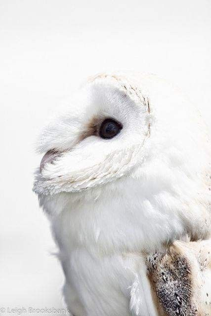 Hogwarts Mystery Owls : hogwarts, mystery, Fukurodani, Harry, Potter,, Potter, Aesthetic,, Hogwarts, Mystery