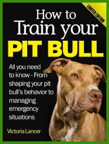 New Puppy New You Dog Training You Can Find Out More