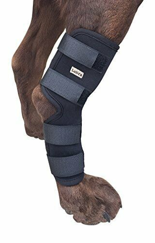 canine knee brace by neoprene