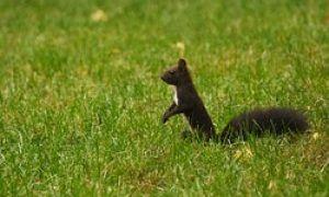 Eichhörnchen im Winter füttern - Tipps für die unwirtliche Zeit