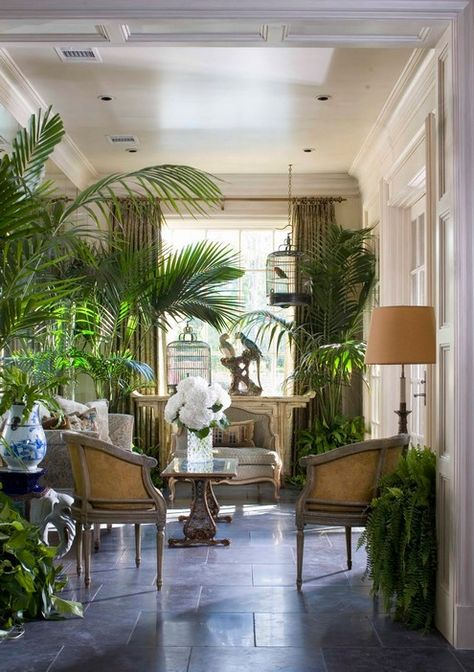 Colonial style living room with many ferns and other plants. There must always be at least one big plant in every british colonial design. West Indies Decor, West Indies Style, British West Indies, Tropical Interior, Tropical Decor, Tropical Plants, Green Plants, Palm Plants, Big Plants
