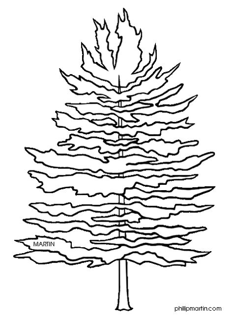 Pix For Clip Art Pine Trees Black And White Tree Coloring Page