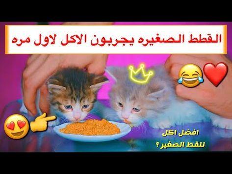 قطط صغيره تجرب الاكل لاول مره ايش الاكل المناسب Mohamed Vlog Cute Drawings Drawings Cute