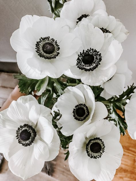 Make your own Crochet Anemone flowers, perfect for as a crochet bridal bouquet. Easy step by step written My Flower, Beautiful Flowers, Fresh Flowers, White Anemone Flower, Anemone Bouquet, Peonies Bouquet, Pink Bouquet, Brooch Bouquets, Exotic Flowers