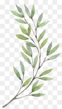 Hand Painted Plants Plants Clipart Hand Painted Plant Png