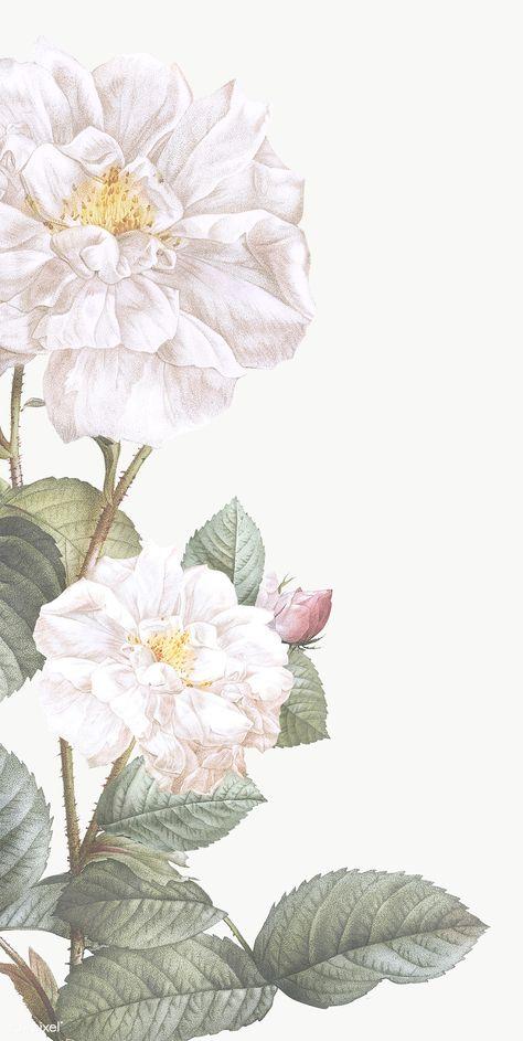 Download premium png of Elegant floral frame design transparent png by manotang about png, invitation, illustration, artwork and beautiful 842524