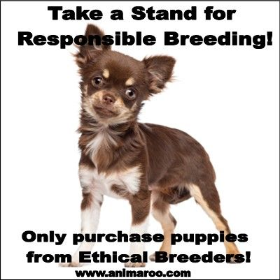 Research Your Breeder Before Purchasing A Purebred Puppy Www