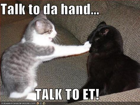 funny pictures of cats talking | Cat Talk, Kitty Litter, and Inglorious, Litigious Homo Sapiens