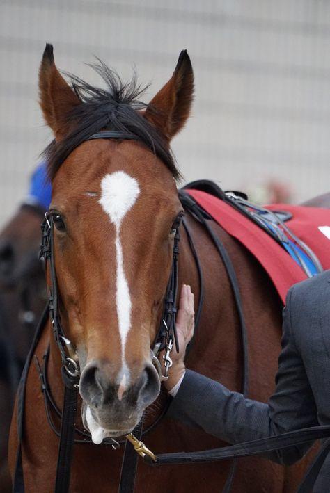 Mari On 馬の顔 Horse Face 馬の顔馬かわいい