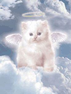 28 idées de Anges animaux | animaux, ange, illustration de chat