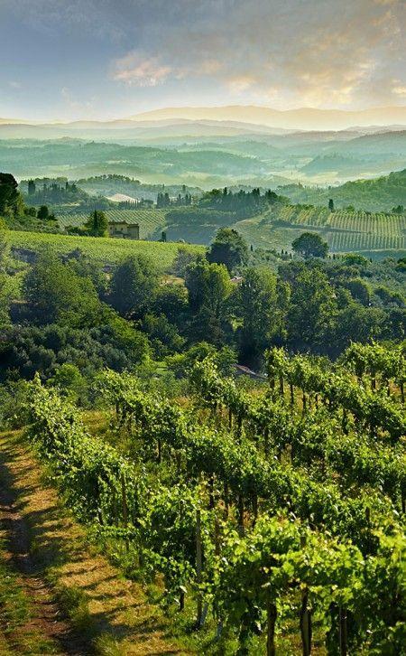 Stock Photo - Chianti vineyards and vines of San Gimignano at sunrise, Tuscany Italy Toscana Italy, Siena Italy, Sorrento Italy, Italy Italy, Naples Italy, Florence Italy, Puglia Italy, Venice Italy, Italy Vacation
