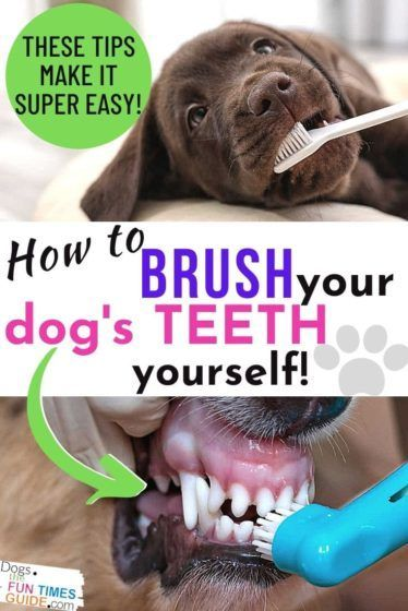Dog Teeth Brushing Tips See Exactly How To Brush Your Dog S Teeth Yourself It S Cheaper Than A Dog Dental Cleaning After You Ve Waited Too Long In 2020 Brushing Dogs Teeth Dog