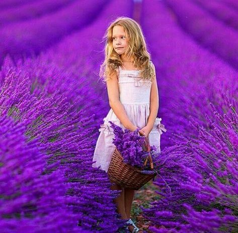 62 Lavender ideas | lavender fields, lavender, lavender fields photography