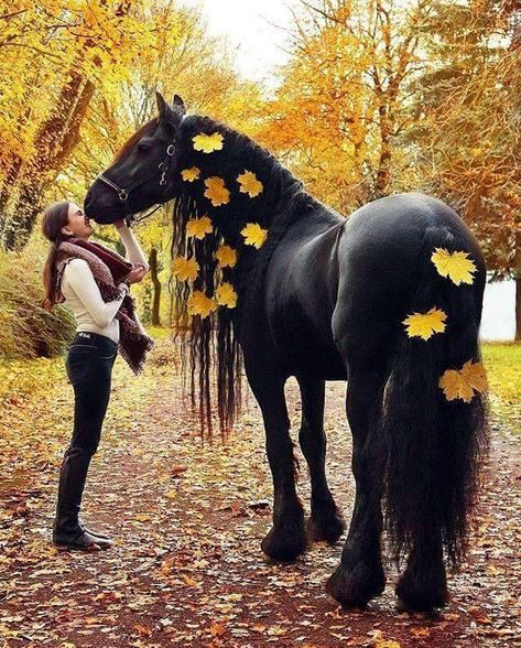 Unique and creative Gorgeous black horse pictures , Baby Animals Pictures, Cute Animal Photos, Horse Pictures, Pretty Animals, Cute Little Animals, Animals Beautiful, Cute Horses, Pretty Horses, Horse Braiding