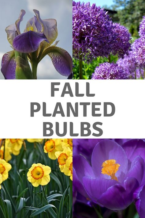 How To Plant Bulbs In The Garden For Spring Planting Bulbs